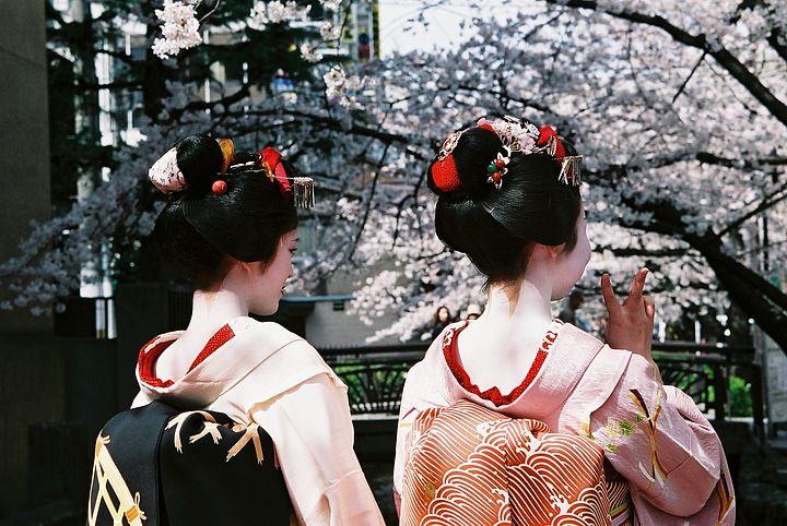 kyoto-fiori-ciliegio