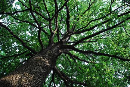 alberi23