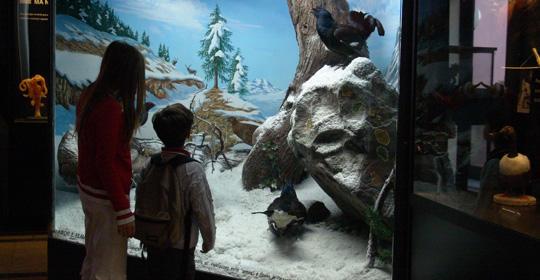 museo-civico-di-zoologia