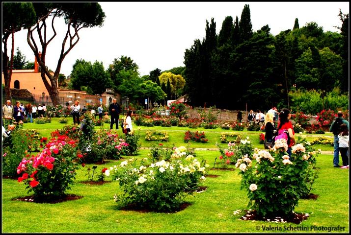 giardino-del-roseto-comunale-di-roma (Small)