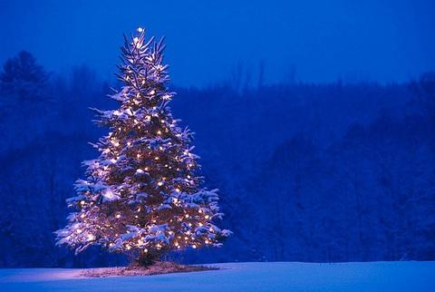 Photo arbre de Noël - Fondation David Suzuki-thumb-480xauto-2513