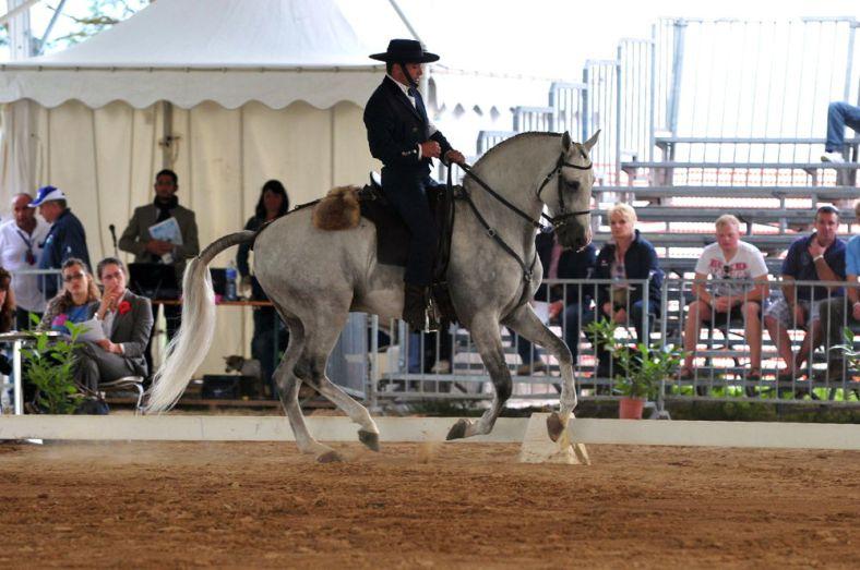 cavalli a roma-2